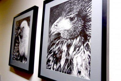 Eagles in black and white